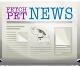 Fetch Pet News